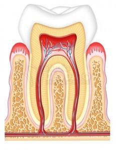 denti da riparare